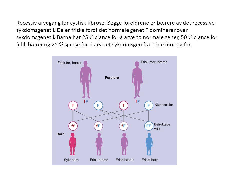Recessiv arvegang for cystisk fibrose. Begge foreldrene er bærere av det recessive sykdomsgenet f. De er friske fordi det normale genet F dominerer ov
