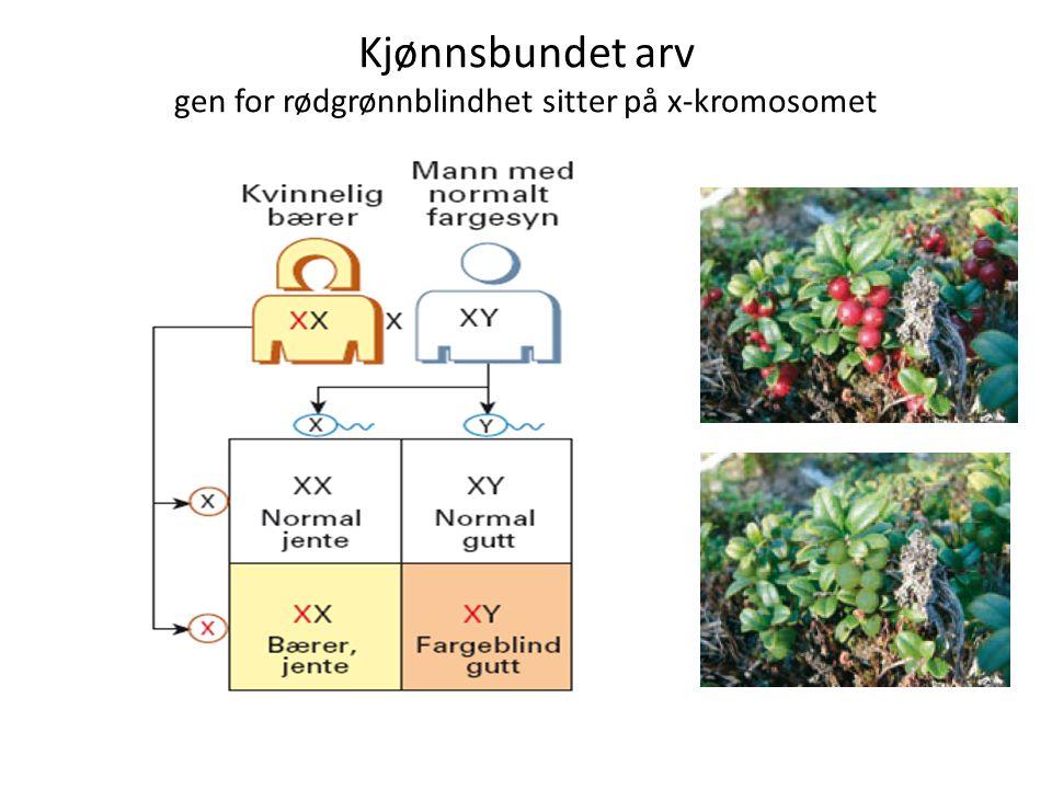 Kjønnsbundet arv gen for rødgrønnblindhet sitter på x-kromosomet