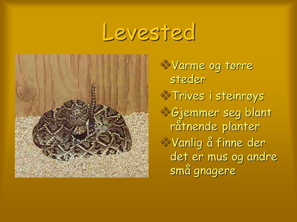 KJENNETEGN TTTTrekantet, flatt hode DDDDiamant- mønster bak LLLLigger og venter på byttet SSSSpiser egg, fugler og firfisler