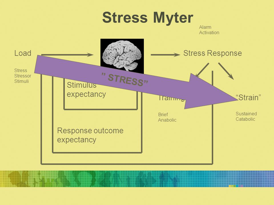 "LoadStress Response Training""Strain"" Stimulus expectancy Response outcome expectancy Stress Stressor Stimuli Alarm Activation Brief Anabolic Sustained"