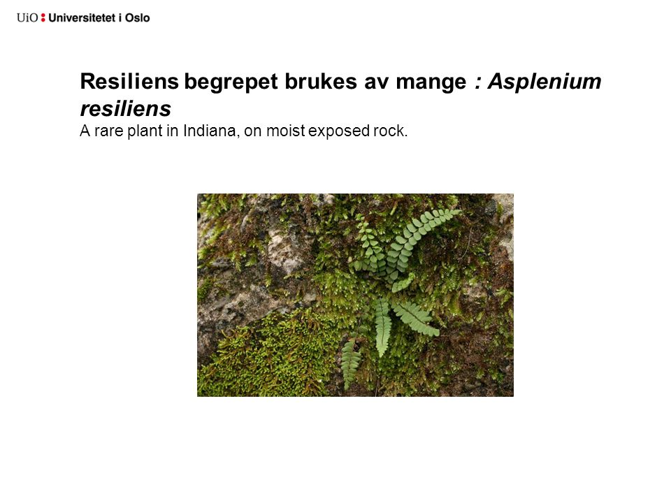 Resiliens begrepet brukes av mange : Asplenium resiliens A rare plant in Indiana, on moist exposed rock.