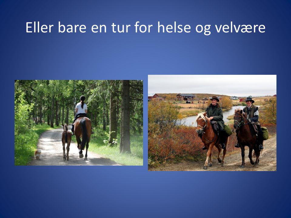 Kvalitetssikring må kunne dokumenteres • Kvalitetssikring gjennomføres nå på alle områder i samfunnet - hestebransjen er ikke noe unntak • Sportsorganisasjonene har krav til lisenser og lignende for å kunne delta i konkurranser • Krav til opplæring og kompetanse vil tvinge seg frem på alle aktivitetsområder.