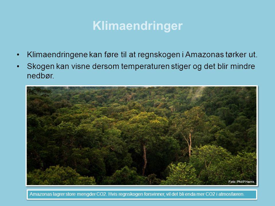 Klimaendringer •Klimaendringene kan føre til at regnskogen i Amazonas tørker ut. •Skogen kan visne dersom temperaturen stiger og det blir mindre nedbø