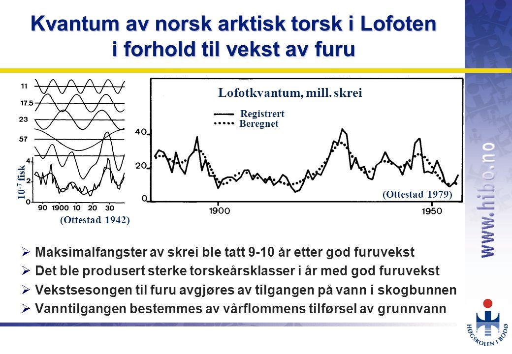 OMJ-98 Kvantum av norsk arktisk torsk i Lofoten i forhold til vekst av furu  Maksimalfangster av skrei ble tatt 9-10 år etter god furuvekst  Det ble produsert sterke torskeårsklasser i år med god furuvekst  Vekstsesongen til furu avgjøres av tilgangen på vann i skogbunnen  Vanntilgangen bestemmes av vårflommens tilførsel av grunnvann 10 -7 fisk Registrert Beregnet Lofotkvantum, mill.