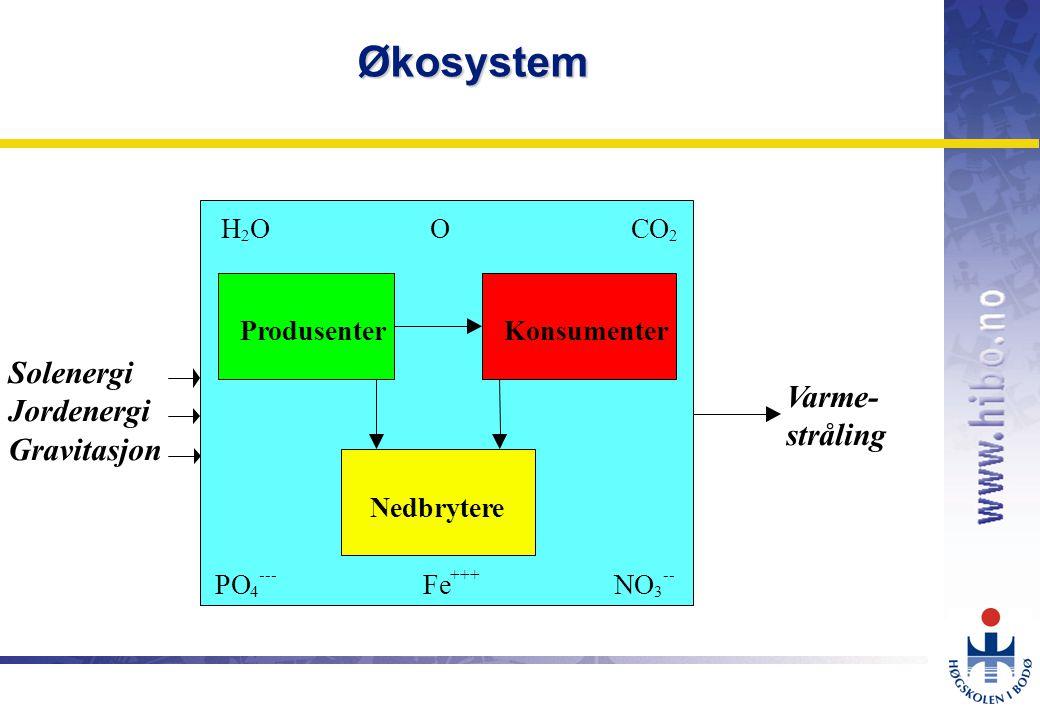 OMJ-98 Planktonalger 1 Dyreplankton 2 Sild og lodde 3 100 10 1 g C m -2 år -1 Varmetap Kroppsvev Føde Avkom Arbeid Organisme 90% (driftskostnader, vedlikehold) 10% (produkt) Effektivitet i næringsnett