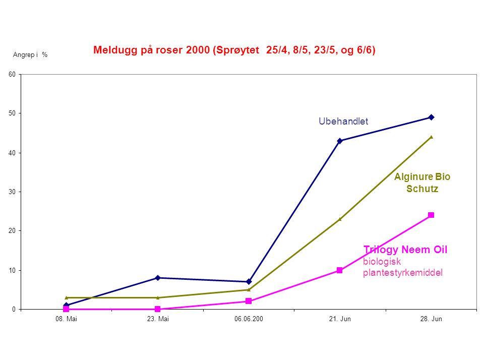 Meldugg på roser 2000 (Sprøytet 25/4, 8/5, 23/5, og 6/6) 0 10 20 30 40 50 60 08.