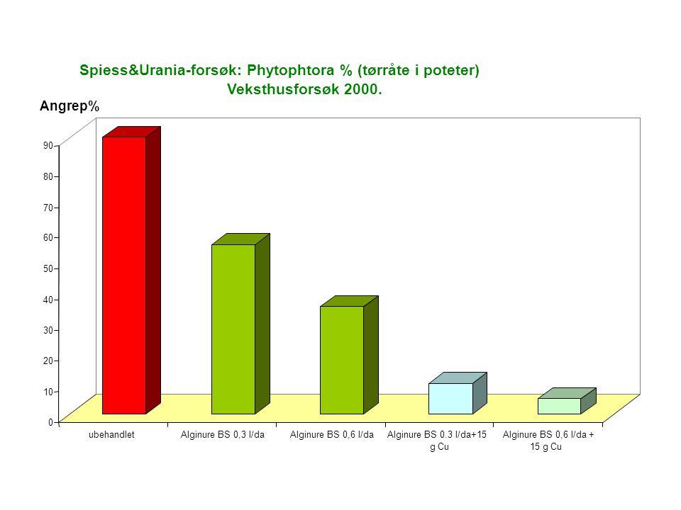 0 10 20 30 40 50 60 70 80 90 ubehandletAlginure BS 0,3 l/daAlginure BS 0,6 l/daAlginure BS 0.3 l/da+15 g Cu Alginure BS 0,6 l/da + 15 g Cu Spiess&Urania-forsøk: Phytophtora % (tørråte i poteter) Veksthusforsøk 2000.