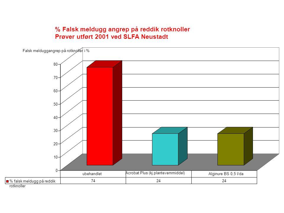 0 10 20 30 40 50 60 70 80 % Falsk meldugg angrep på reddik rotknoller Prøver utført 2001 ved SLFA Neustadt % falsk meldugg på reddik rotknoller 7424 ubehandlet Acrobat Plus (kj.plantevernmiddel) Alginure BS 0,5 l/da Falsk melduggangrep på rotknoller i %