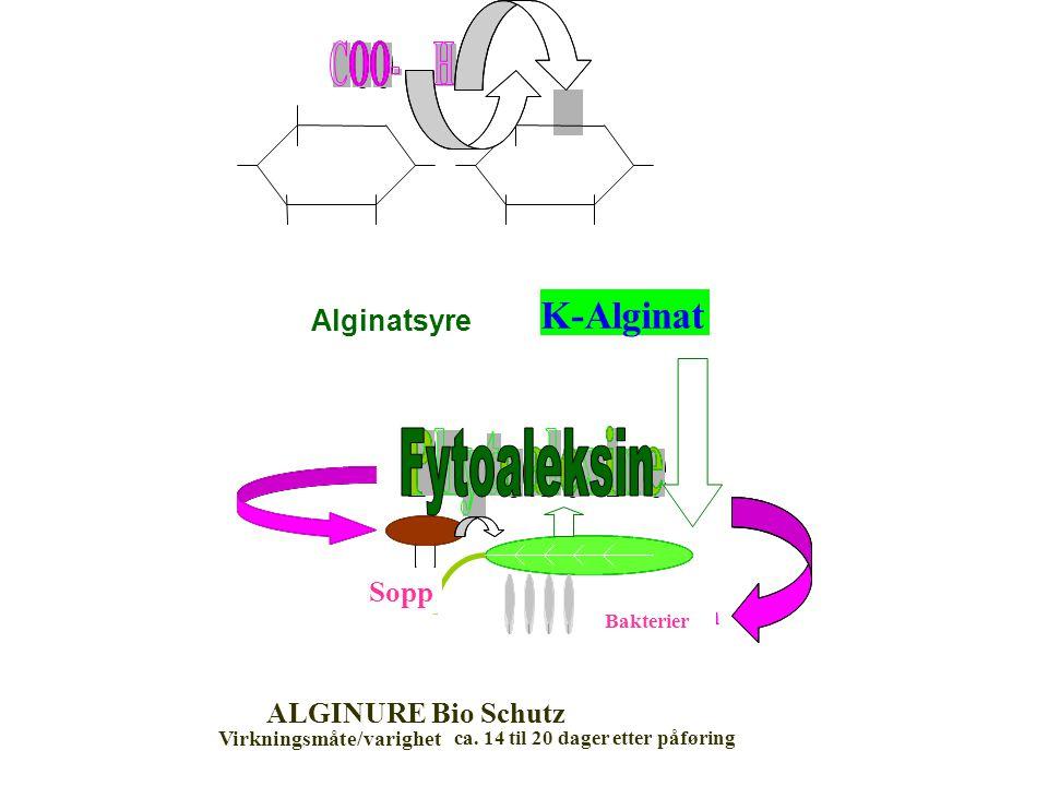 Alginsäure K-Alginat Pilze Bakterien ALGINURE Bio Schutz Virkningsmåte/varighet ca.