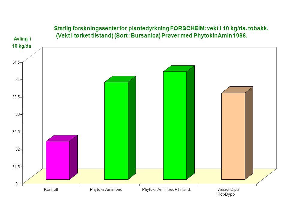 31 31,5 32 32,5 33 33,5 34 34,5 KontrollPhytokinAmin bedPhytokinAmin bed+ Friland.Wurzel-Dipp Rot-Dypp Statlig forskningssenter for plantedyrkning FORSCHEIM: vekt i 10 kg/da.