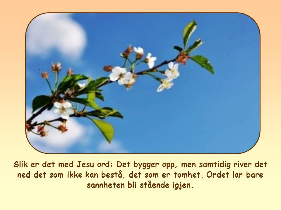 Slik er det med Jesu ord: Det bygger opp, men samtidig river det ned det som ikke kan bestå, det som er tomhet.