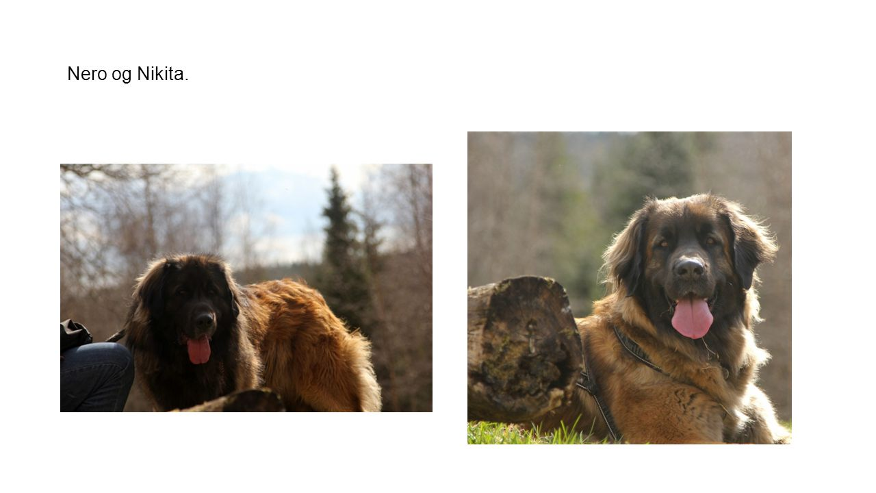 Nero og Nikita.