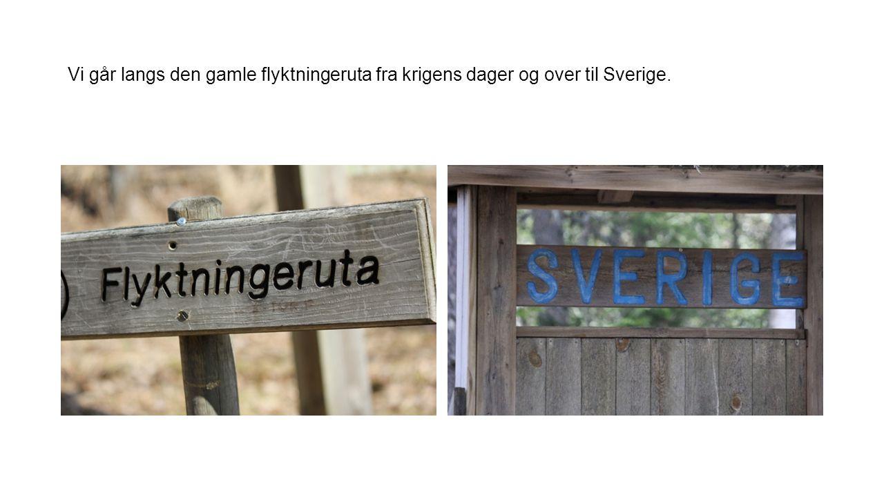Vi går langs den gamle flyktningeruta fra krigens dager og over til Sverige.