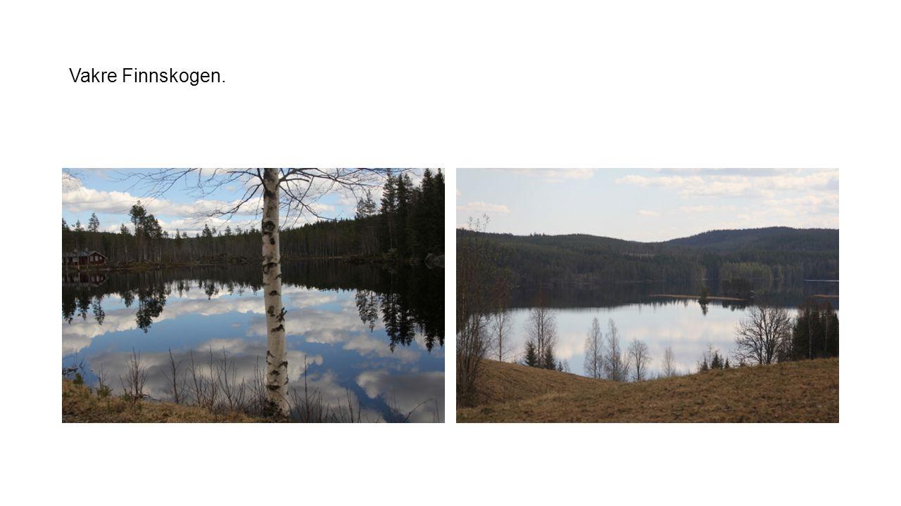 Vakre Finnskogen.