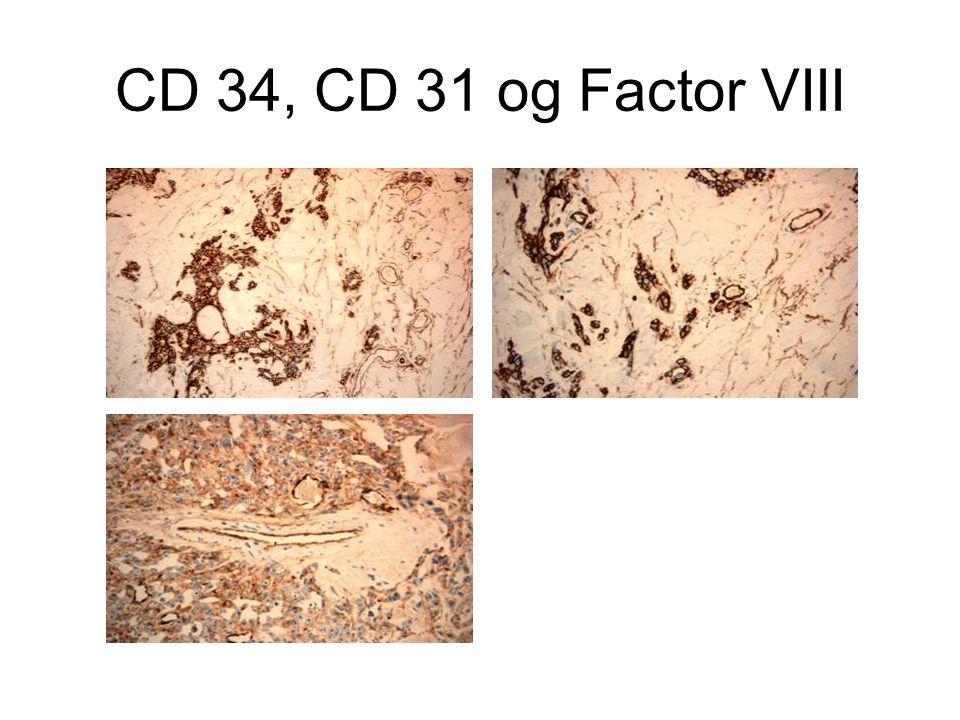CD 34, CD 31 og Factor VIII
