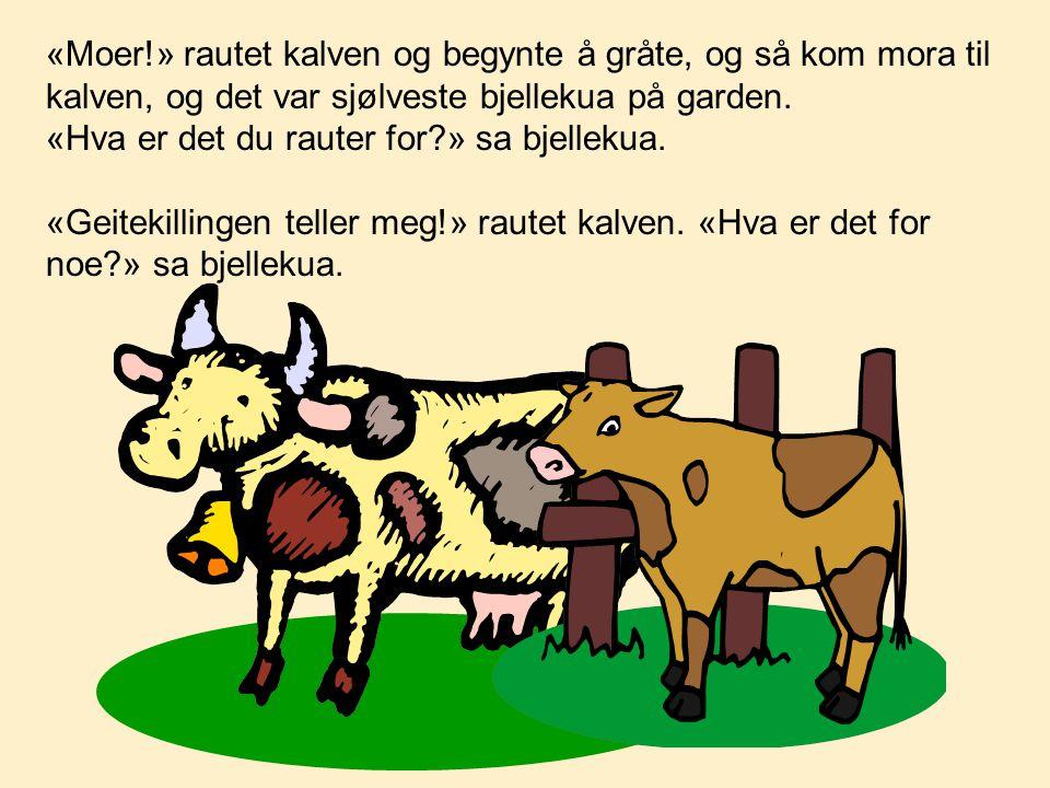«Moer!» rautet kalven og begynte å gråte, og så kom mora til kalven, og det var sjølveste bjellekua på garden. «Hva er det du rauter for?» sa bjellek