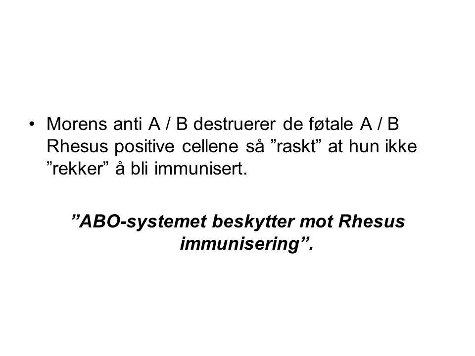 """•Morens anti A / B destruerer de føtale A / B Rhesus positive cellene så """"raskt"""" at hun ikke """"rekker"""" å bli immunisert. """"ABO-systemet beskytter mot Rh"""
