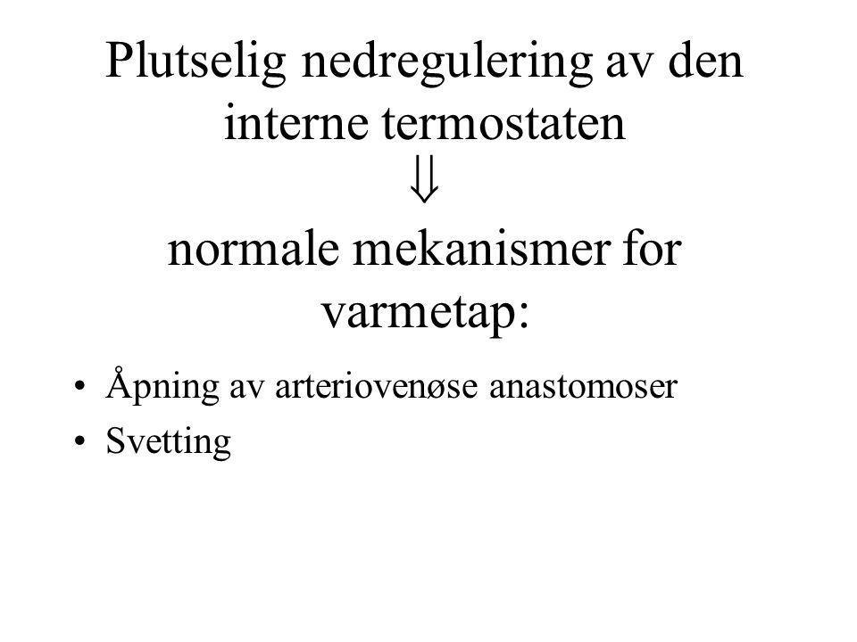 Plutselig nedregulering av den interne termostaten  normale mekanismer for varmetap: •Åpning av arteriovenøse anastomoser •Svetting