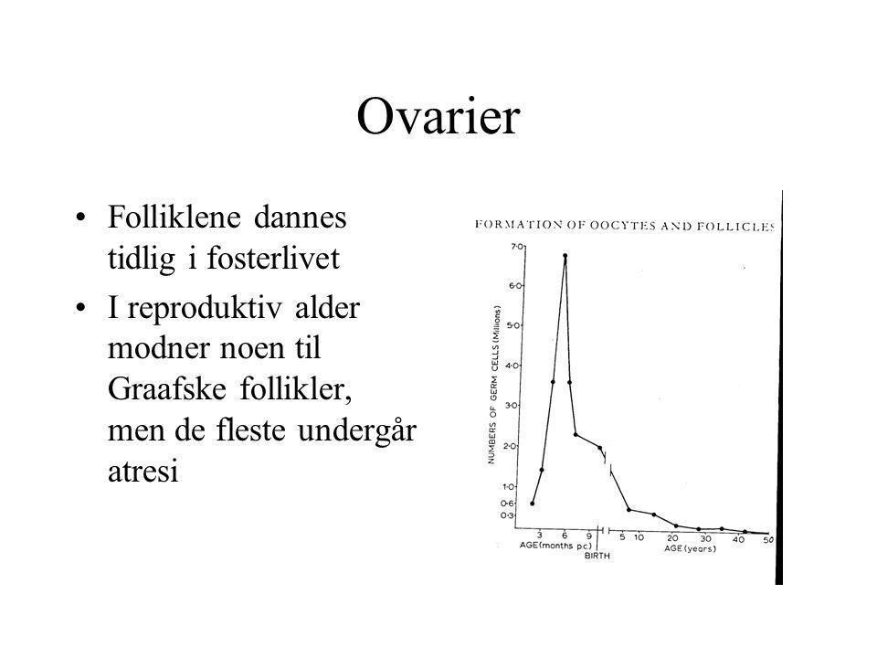 Ovarier •Folliklene dannes tidlig i fosterlivet •I reproduktiv alder modner noen til Graafske follikler, men de fleste undergår atresi