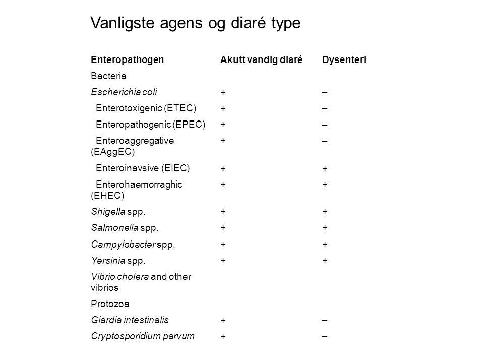 EnteropathogenAkutt vandig diaréDysenteri Bacteria Escherichia coli+– Enterotoxigenic (ETEC)+– Enteropathogenic (EPEC)+– Enteroaggregative (EAggEC) +– Enteroinavsive (EIEC)++ Enterohaemorraghic (EHEC) ++ Shigella spp.++ Salmonella spp.++ Campylobacter spp.++ Yersinia spp.++ Vibrio cholera and other vibrios Protozoa Giardia intestinalis+– Cryptosporidium parvum+– Vanligste agens og diaré type