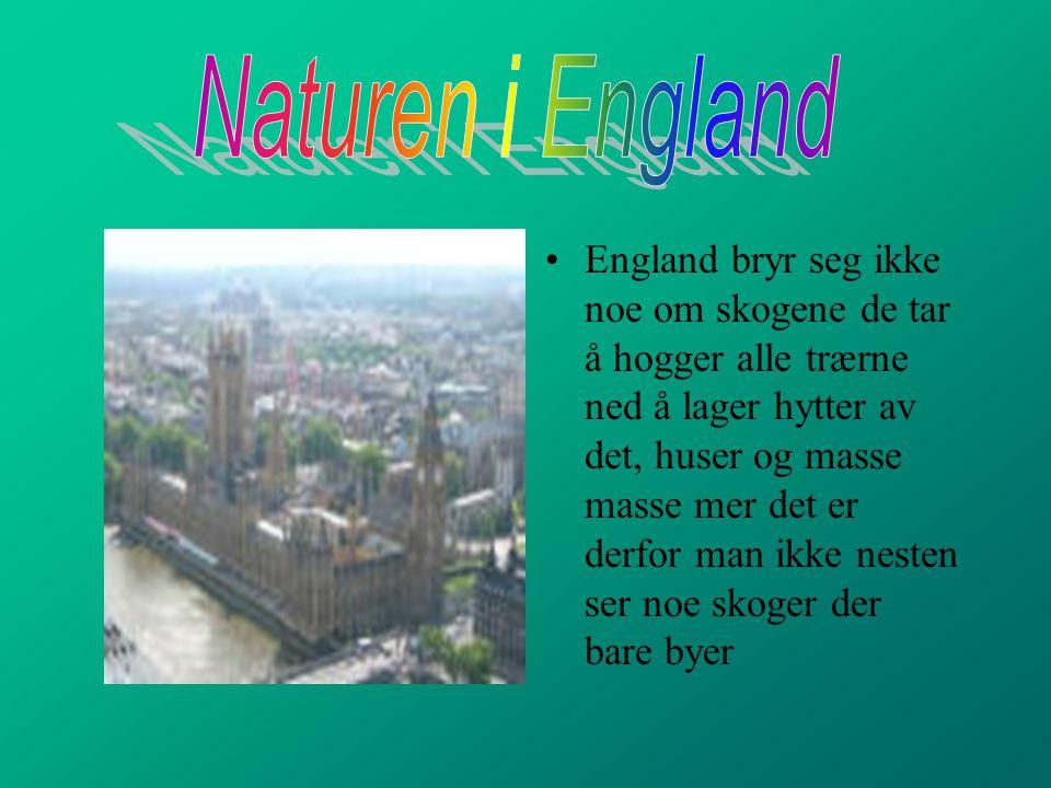 Flatinnhold i England: 244 110km Hovedstad: London Folketall:59,5mill.innb Folketetthet:244 pr.km Middellevealder:77,7år Spedbarnsdødelighet:5,6 pr.tu