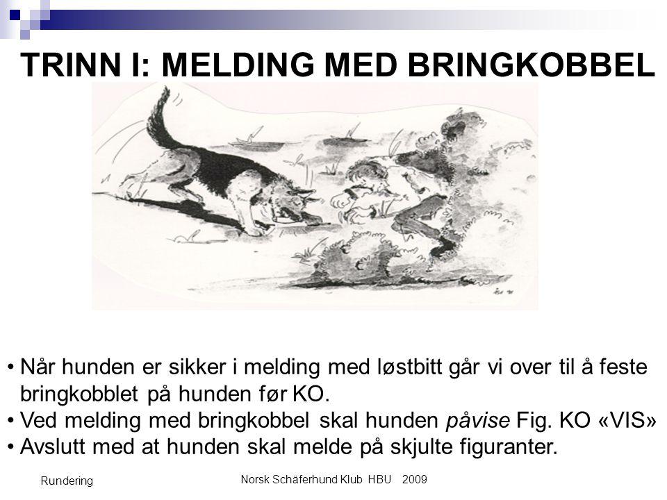 Norsk Schäferhund Klub HBU 2009 Rundering TRINN I: MELDING MED BRINGKOBBEL •Når hunden er sikker i melding med løstbitt går vi over til å feste bringk