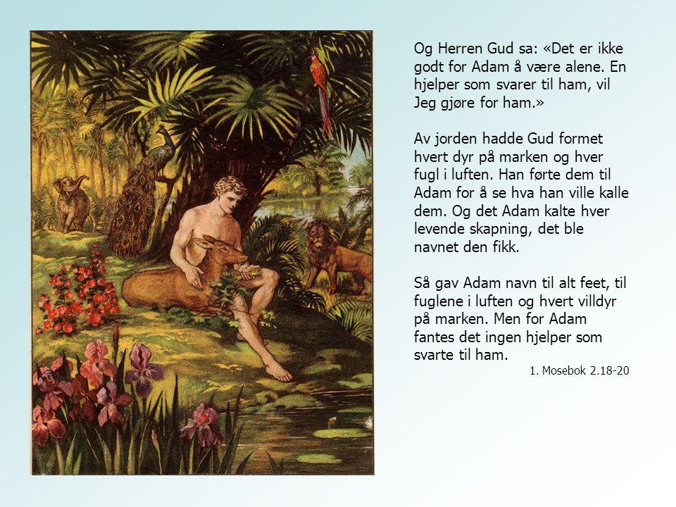 Og Herren Gud sa: «Det er ikke godt for Adam å være alene. En hjelper som svarer til ham, vil Jeg gjøre for ham.» Av jorden hadde Gud formet hvert dyr