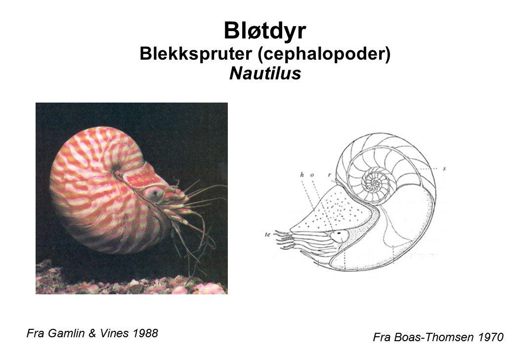 Fra Gamlin & Vines 1988 Fra Boas-Thomsen 1970 Bløtdyr Blekkspruter (cephalopoder) Nautilus