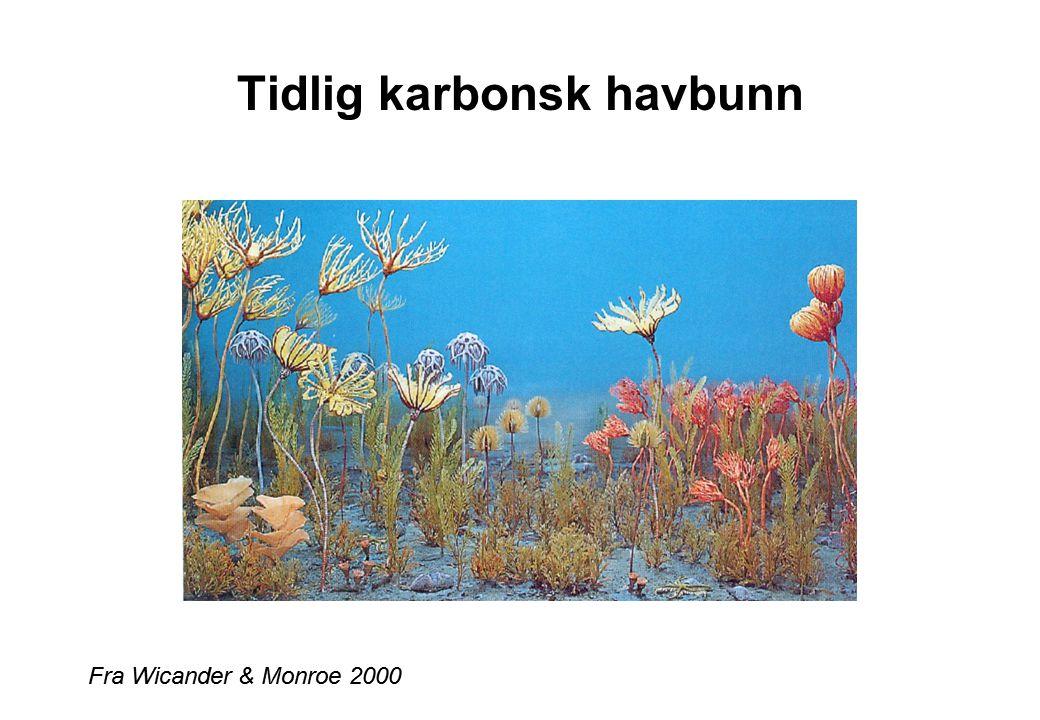 Tidlig karbonsk havbunn Fra Wicander & Monroe 2000