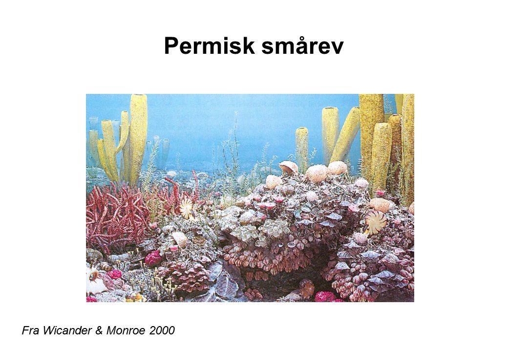 Permisk smårev Fra Wicander & Monroe 2000