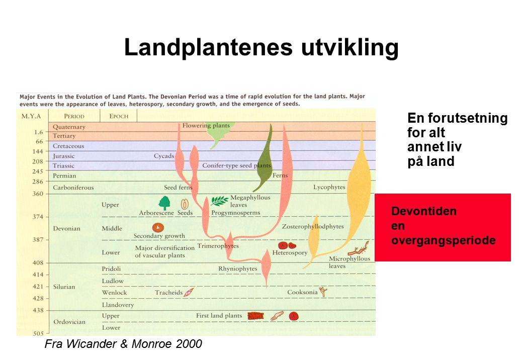 Landplantenes utvikling En forutsetning for alt annet liv på land Fra Wicander & Monroe 2000 Devontiden en overgangsperiode