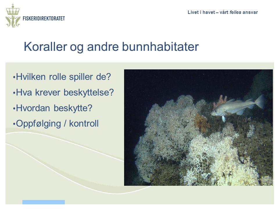 Livet i havet – vårt felles ansvar • Hvilken rolle spiller de? • Hva krever beskyttelse? • Hvordan beskytte? • Oppfølging / kontroll Koraller og andre
