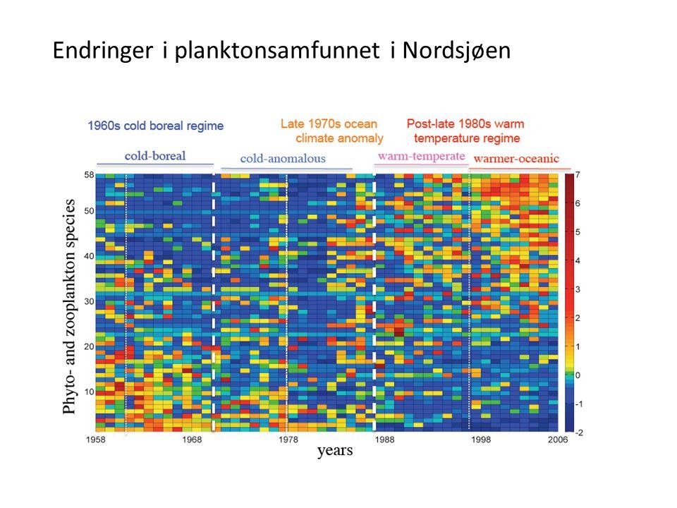 Endringer i planktonsamfunnet i Nordsjøen
