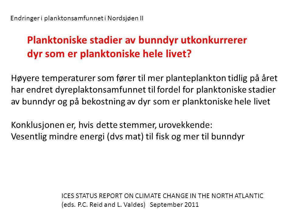 Høyere temperaturer som fører til mer planteplankton tidlig på året har endret dyreplaktonsamfunnet til fordel for planktoniske stadier av bunndyr og på bekostning av dyr som er planktoniske hele livet Konklusjonen er, hvis dette stemmer, urovekkende: Vesentlig mindre energi (dvs mat) til fisk og mer til bunndyr Endringer i planktonsamfunnet i Nordsjøen II Planktoniske stadier av bunndyr utkonkurrerer dyr som er planktoniske hele livet.