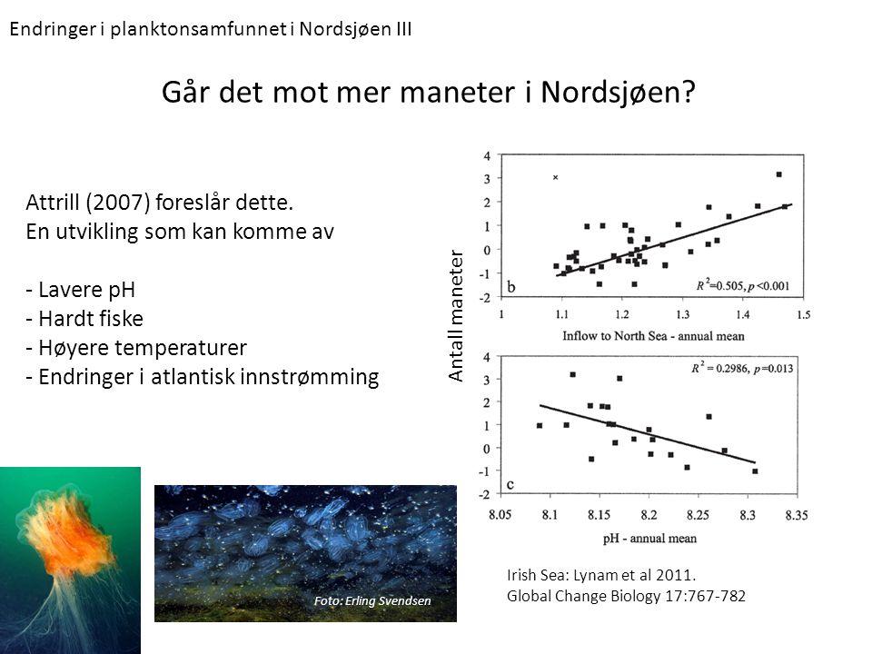 Går det mot mer maneter i Nordsjøen? Attrill (2007) foreslår dette. En utvikling som kan komme av - Lavere pH - Hardt fiske - Høyere temperaturer - En