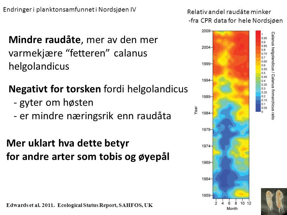 """Mindre raudåte, mer av den mer varmekjære """"fetteren"""" calanus helgolandicus Edwards et al. 2011. Ecological Status Report, SAHFOS, UK Relativ andel rau"""