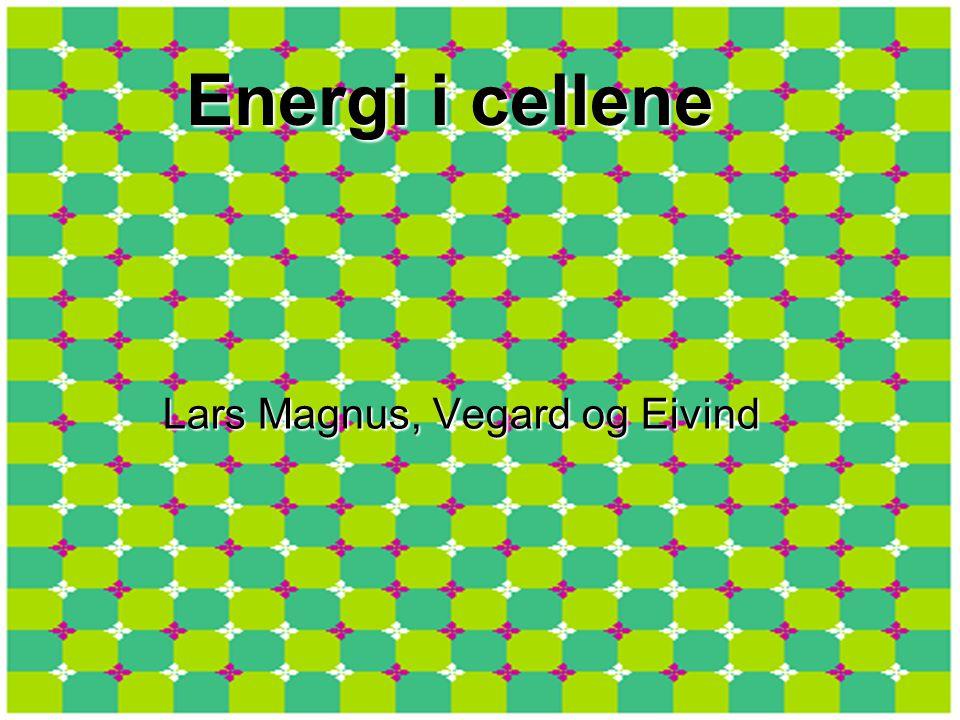 Energi i cellene Lars Magnus, Vegard og Eivind