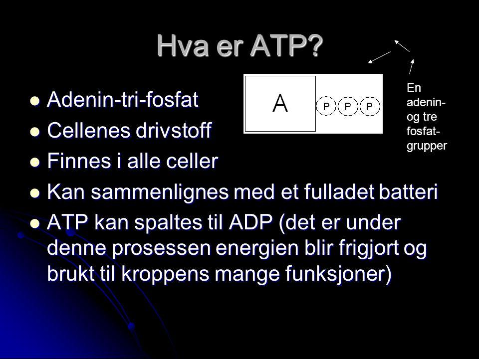 Hva er ATP?  Adenin-tri-fosfat  Cellenes drivstoff  Finnes i alle celler  Kan sammenlignes med et fulladet batteri  ATP kan spaltes til ADP (det