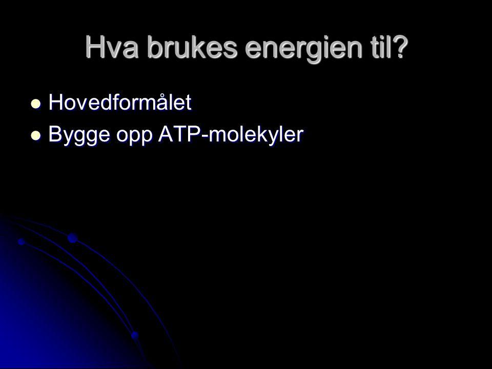 Hva brukes energien til  Hovedformålet  Bygge opp ATP-molekyler