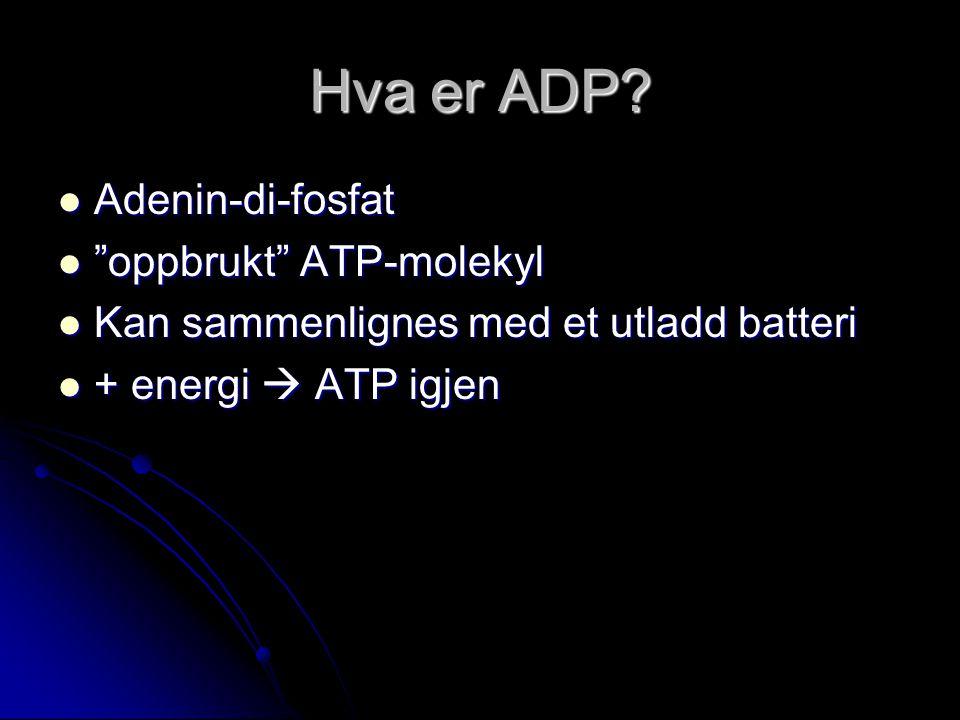 Hva er ADP.