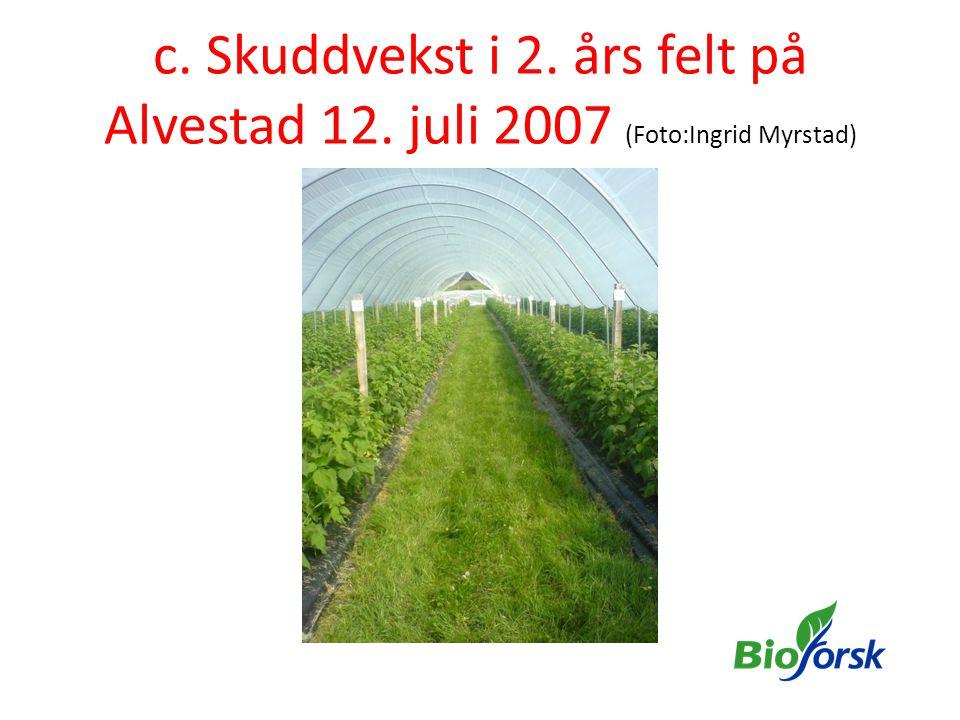 c. Skuddvekst i 2. års felt på Alvestad 12. juli 2007 (Foto:Ingrid Myrstad)