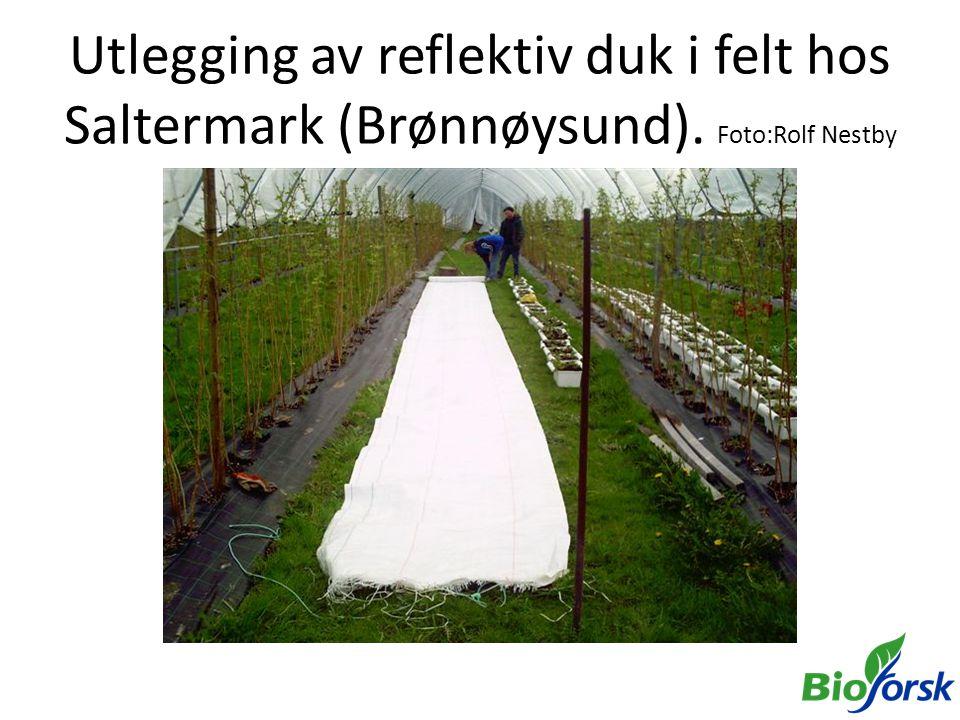Utlegging av reflektiv duk i felt hos Saltermark (Brønnøysund). Foto:Rolf Nestby