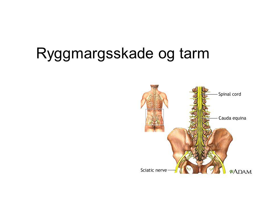 Styring av tarm via ryggmarg •Efferente (tilførende) baner: Endetarms- peristaltikk og indre lukkemuskel → S2-S4 •Afferente (fraførende) baner fra tarmvegg: Plexus pelvicus→ S2-S4.