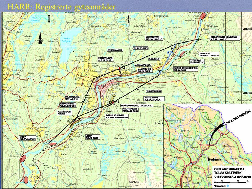 Ørret: Registrerte gyteområder