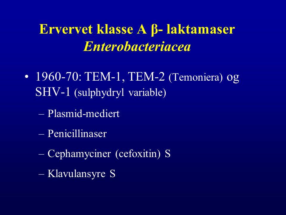 Ervervet klasse A β- laktamaser Enterobacteriacea 1960-70: TEM-1, TEM-2 (Temoniera) og SHV-1 (sulphydryl variable) –Plasmid-mediert –Penicillinaser –Cephamyciner (cefoxitin) S –Klavulansyre S