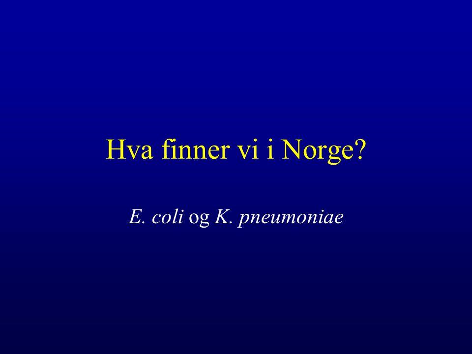 Hva finner vi i Norge? E. coli og K. pneumoniae