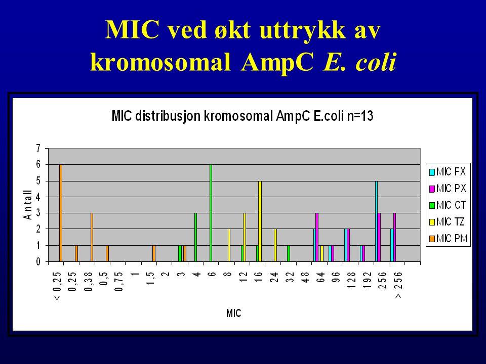 MIC ved økt uttrykk av kromosomal AmpC E. coli