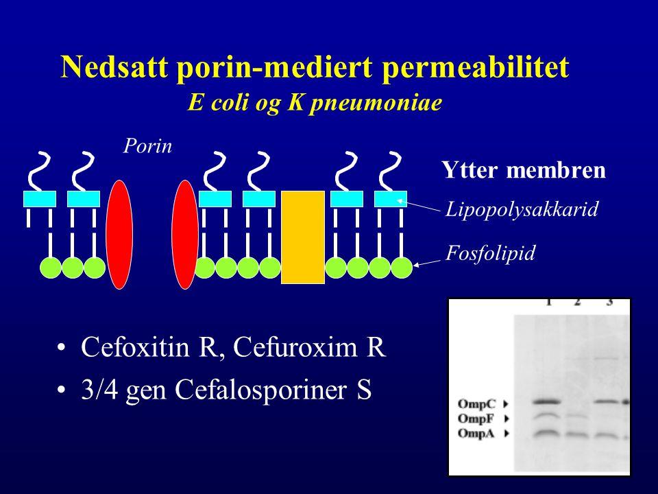Nedsatt porin-mediert permeabilitet E coli og K pneumoniae Cefoxitin R, Cefuroxim R 3/4 gen Cefalosporiner S Ytter membren Lipopolysakkarid Fosfolipid Porin