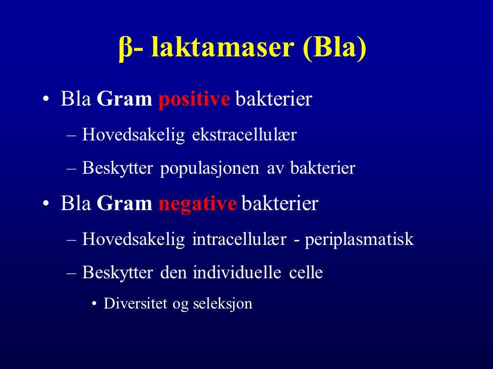 β- laktamaser (Bla) Bla Gram positive bakterier –Hovedsakelig ekstracellulær –Beskytter populasjonen av bakterier Bla Gram negative bakterier –Hovedsa