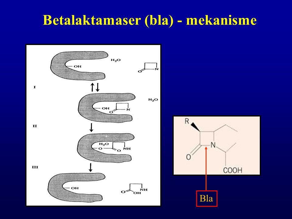 β- laktamase-inhibitorer Klavulansyre Tazobactam Sulbaktam Irreversibel binding 1:1 til Bla Hemmende effekt influert av –Bla-hyperproduksjon –Inokulum